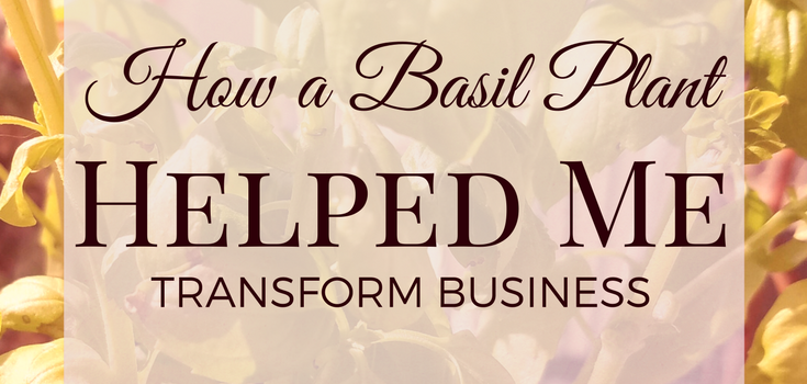 a basil plant helped me transform business