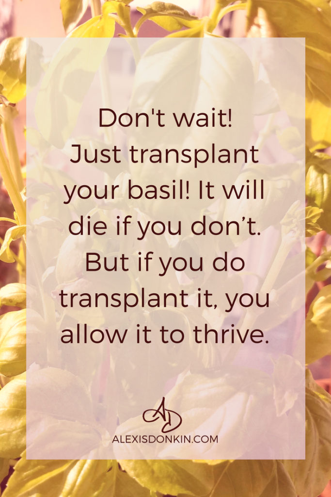 transplant the basil blog quote